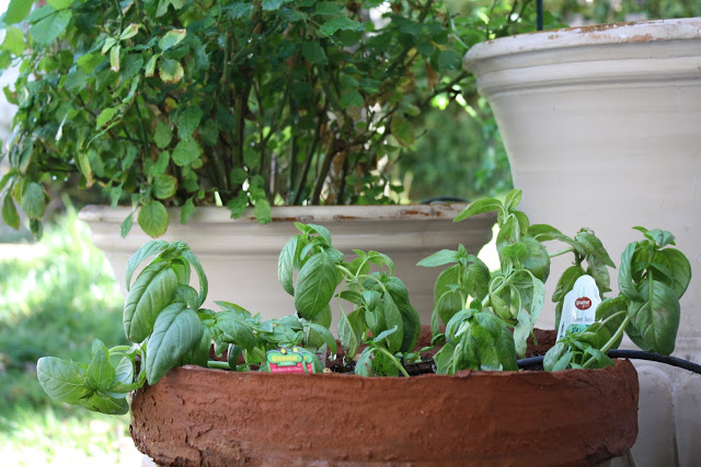 How to Plant an Herb Garden - Wendys Hat
