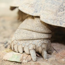 How To Care for a Desert Tortoise {Garden}