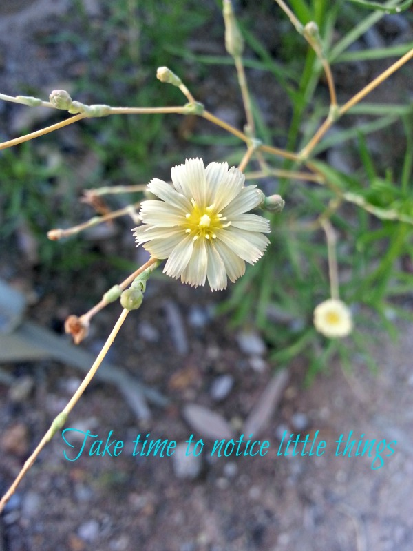 Take time to notice little things