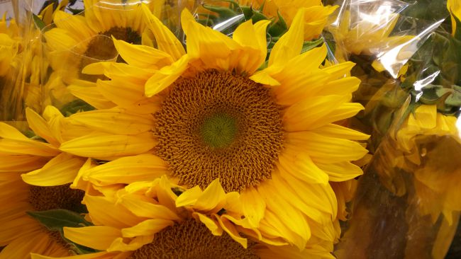 Sunflowers at Smart & Final Las Vegas Grand Opening